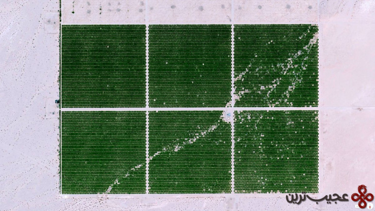 مراتع کادیز، اسکس، کالیفرنیا، ایالات متحده