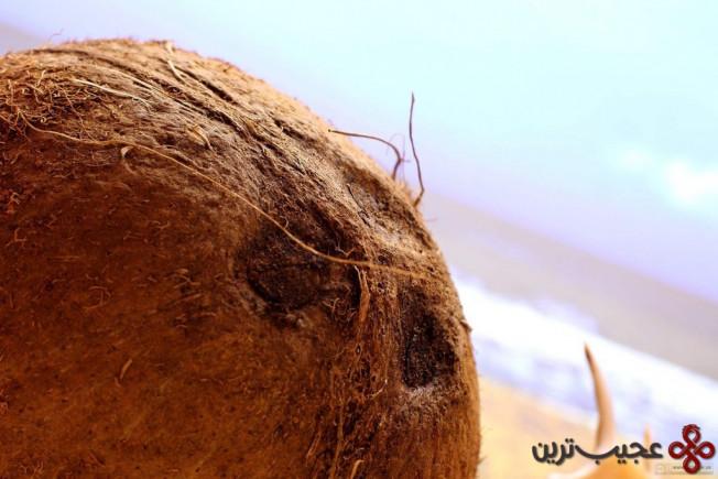 تاریخچه کاشت نارگیل آنقدر قدیمیاست که حتی نمیدانیم اولینبار در کجا کاشته شد