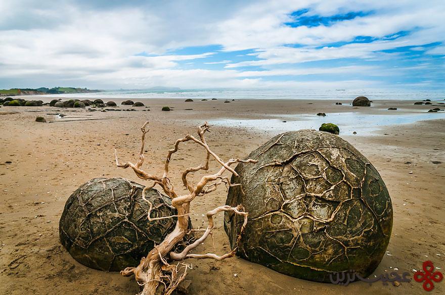 تخماژدها در ساحل کوئه کوهه، نیوزیلند ۱