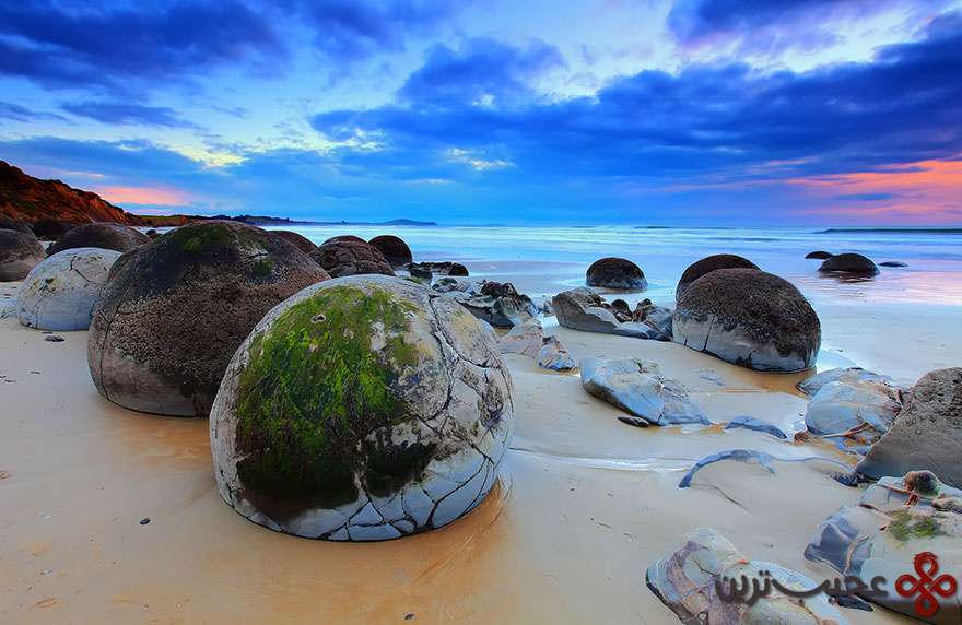 تخماژدها در ساحل کوئه کوهه، نیوزیلند ۲