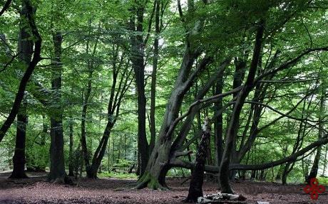 ترس از درختان
