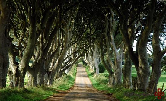حصارهای تیره؛ ایرلندشمالی