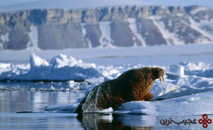 زندگی در قطب جریان دارد