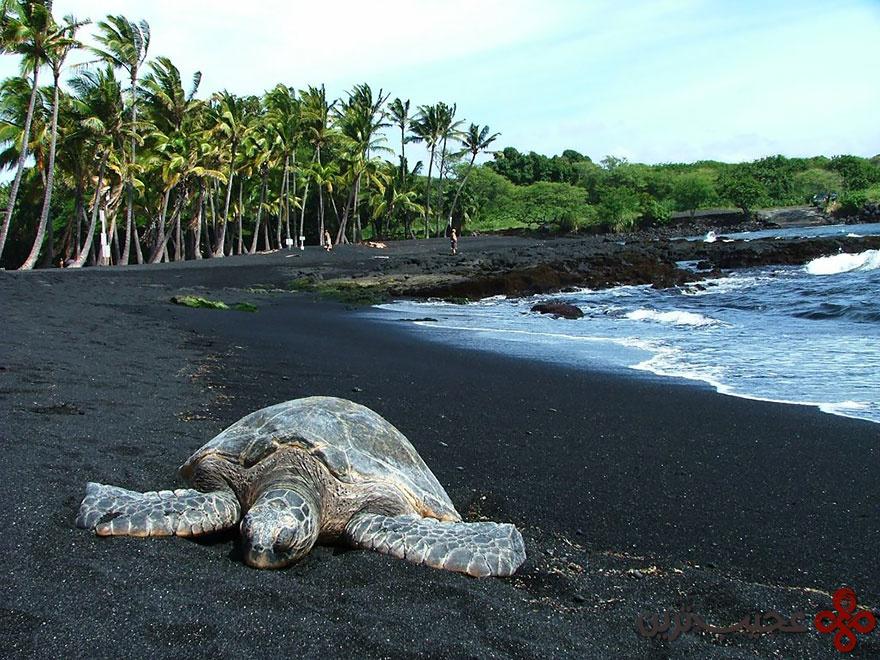 ساحل شن سیاه پونالوو، هاوایی ۱