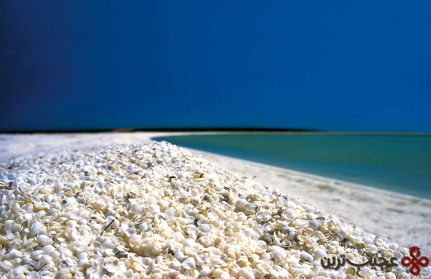 ساحل صدفی، خلیج شارک، استرالیا