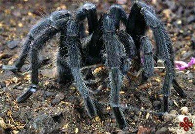 عنکبوت شکننده