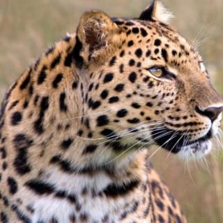 عکس کاور ۱۰ جانور که در معرض خطر انقراض قرار دارند