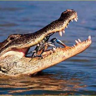 عکس کاور ۶ تا از آدمخوارترین حیوانات