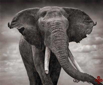 فیلها گیاهخوار هستند