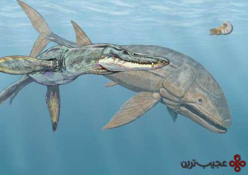 لید سیچیتیس (ماهی)