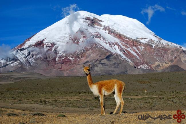 مرتفعترین کوه زمین، اورست نیست
