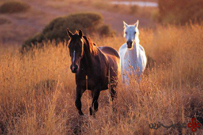 نقطه کور عجیب اسب ها