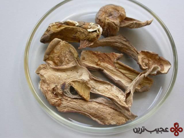 گونهٔ جدید قارچ