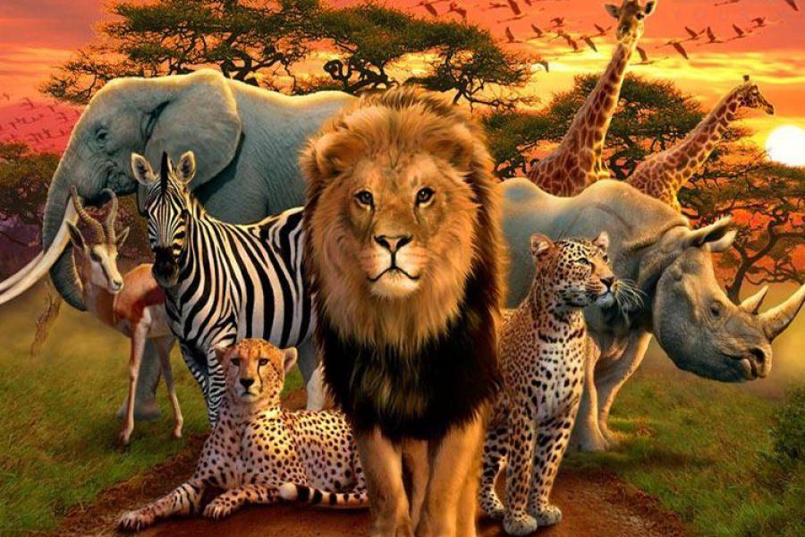 ۱۰ حیوان مرگبار دنیا!