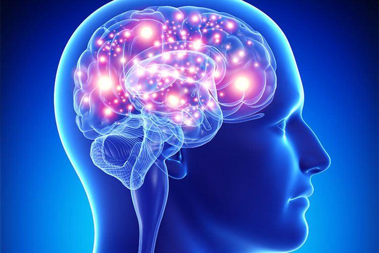 ۱۰ باور نادرست درباره مغز انسان!